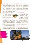Ananas zomeractie - Fairtrade Gemeente - Page 2