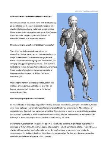 Hvilken funktion har skeletmusklerne i kroppen ... - Asma Bashir