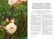 54-59 rosariet - Natur & Trädgård