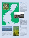 HavsUtsikt nr 3,2009 - Havet.nu - Page 5