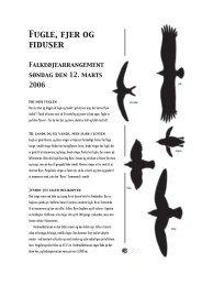 Fjer, flyvning og fiduser - Naturhistorisk Museum