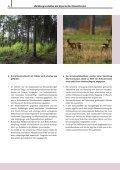 Waldbaugrundsätze der Bayerischen ... - Bayerische Staatsforsten - Seite 6