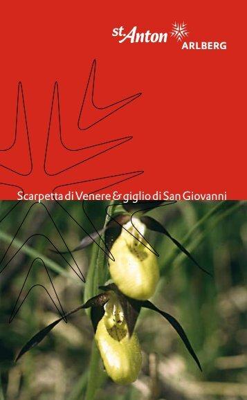 Scarpetta di Venere & giglio di San Giovanni