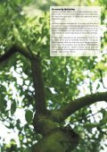 Massiva trägolv - Hem - Page 3