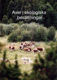 Avel i ekologiska besättningar - HS Konsult - Hushållningssällskapet