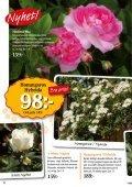 Bra pris! - Nisses Växter - Page 6