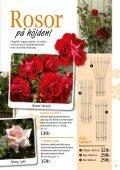 Bra pris! - Nisses Växter - Page 7