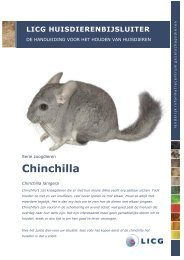 Download de huisdierenbijsluiter Chinchilla - LICG