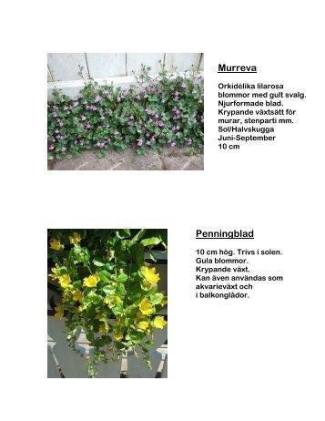 Blommor - poppyfield.se