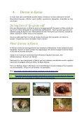 Download hier - Vrijwilligerswerk in Afrika - Page 6
