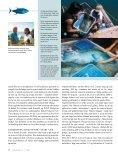 Øverst: Napoleonsfisk. Nederst: En dykker samler døde fisk ... - Toppx2 - Page 3