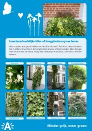 Sierlijke klimplanten ( pdf , 2.13 MB) - EcoHuis Antwerpen - Stad ...