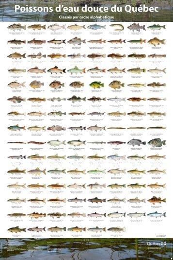 Affiches des poissons d'eau douce du Québec - Développement ...