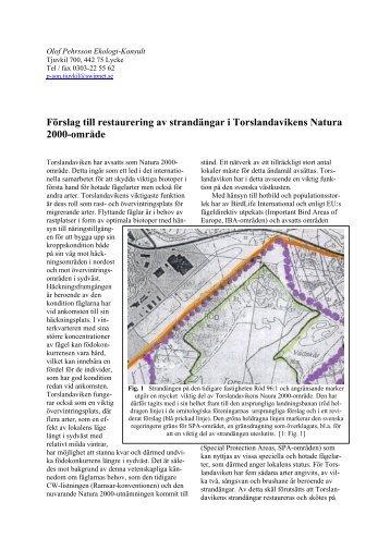 Förslag till restaurering av strandängar i ... - Ekologikonsult