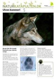 Ulven kommer. En guide til Ulven (PDF).