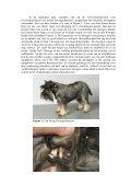 De schildklieren van de hond zijn 2 aparte klieren die in ... - Schnauzer - Page 2