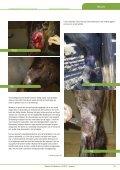 Wonden bij paarden - Page 2