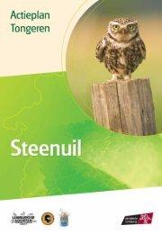 Tongeren - steenuil - Provincie Limburg