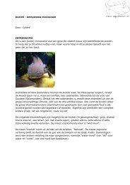 Axolotl - Ambystoma mexicanum Door: CyberE ... - Aquaforum