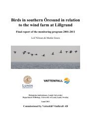 Birds in southern Öresund in relation to the wind farm at ... - Vattenfall