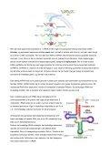 Fra DNA til protein Det er RNA sekvenser af kort DNA ... - Asma Bashir - Page 2