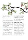 Nationella minoriteter i förskola och skola - Page 4