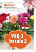 Syrénbuddleja - Solberga Blommor - Page 5