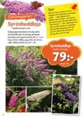 Syrénbuddleja - Solberga Blommor - Page 6
