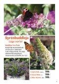 Syrénbuddleja - Solberga Blommor - Page 7