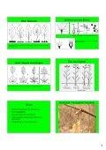 Hand-out Plantencursus-deel1b.pdf - Ivn - Page 3