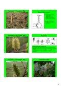 Hand-out Plantencursus-deel1b.pdf - Ivn - Page 4