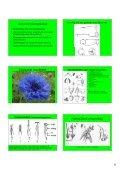 Hand-out Plantencursus-deel1b.pdf - Ivn - Page 5