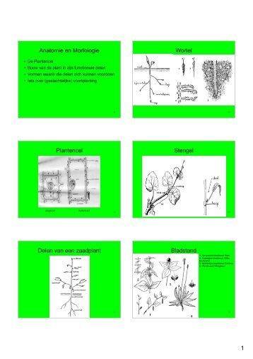 Hand-out Plantencursus-deel1b.pdf - Ivn