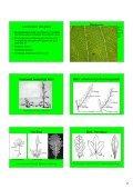 Hand-out Plantencursus-deel1b.pdf - Ivn - Page 2