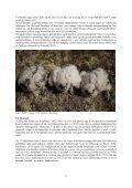 JAKTFALK I BUSKERUD - NOF-Buskerud - Page 6