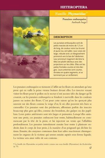 Version originale: pdf - Les insectes de nos jardins