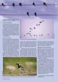Flyttfåglar - Ålands Lyceum - Page 4