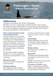 Fiskeregler i havet - Swengelsk