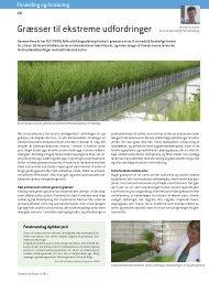 Græsser til ekstreme udfordringer - DLF-TRIFOLIUM Denmark