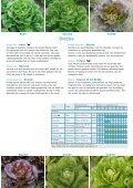Vitalis netherlandsPDF - Enza Zaden - Page 7