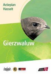 Hasselt - gierzwaluw - Provincie Limburg