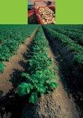 Duurzame akkerbouw in Nederland: prestaties en ... - Akkerbouw.info - Page 4