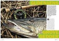 Gudenåens grove gedder - Bjerringbro & omegns Sportsfiskerforening