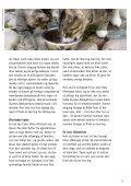 HVIS KATTEN IKKE ER DIN - Dyrenes Beskyttelse - Page 3
