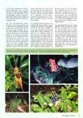 Planten in het terrarium (IV) - Tuinbedrijf Erik Wevers - Page 3