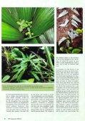 Planten in het terrarium (IV) - Tuinbedrijf Erik Wevers - Page 4