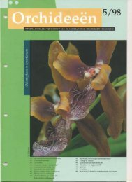 1998 - 5 - Orchideeën Vereniging Vlaanderen