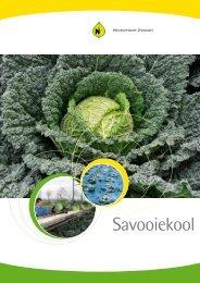 Savooiekool - Brochure Benelux 2011 - Nickerson-Zwaan