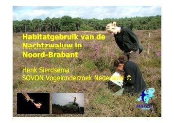 Nachtzwaluw - SOVON Vogelonderzoek Nederland