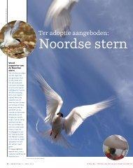 Noordse stern - Netherlands Arctic Station